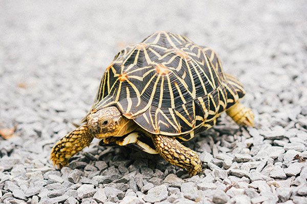 Gifts For Turtle Lovers